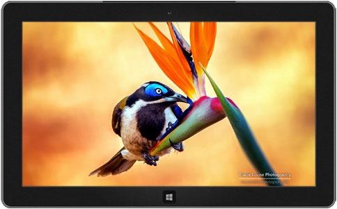 Microsofts Theme, Hintergrundbilder und das Open Call Projekt