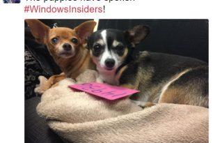 Windows 10 14936 die nächste Insider? – Sie ist es!